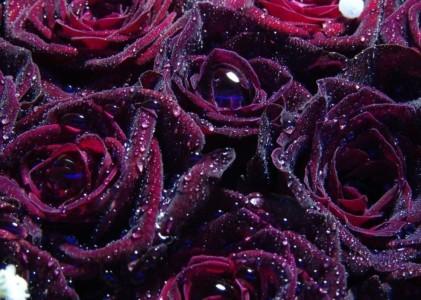 Видеопрезентация компании — производителя исскуственных цветов №1 в России