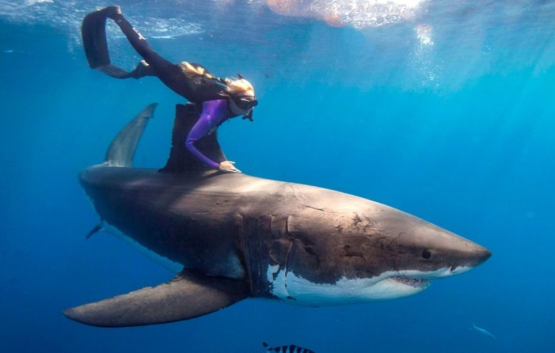 A Blonde and a Great White Shark